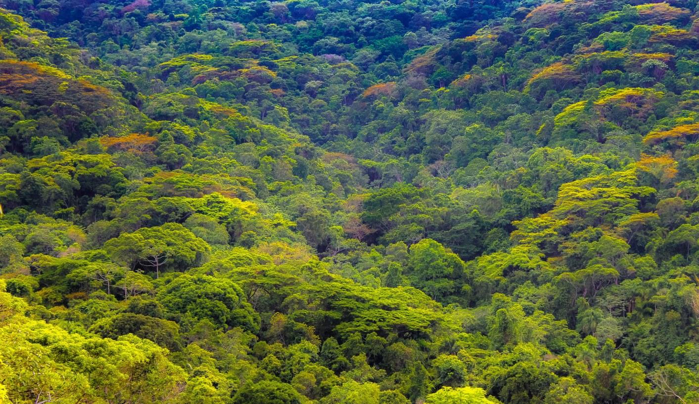 Ubatuba foi o município que mais preservou o bioma, com 85% de vegetação natural.