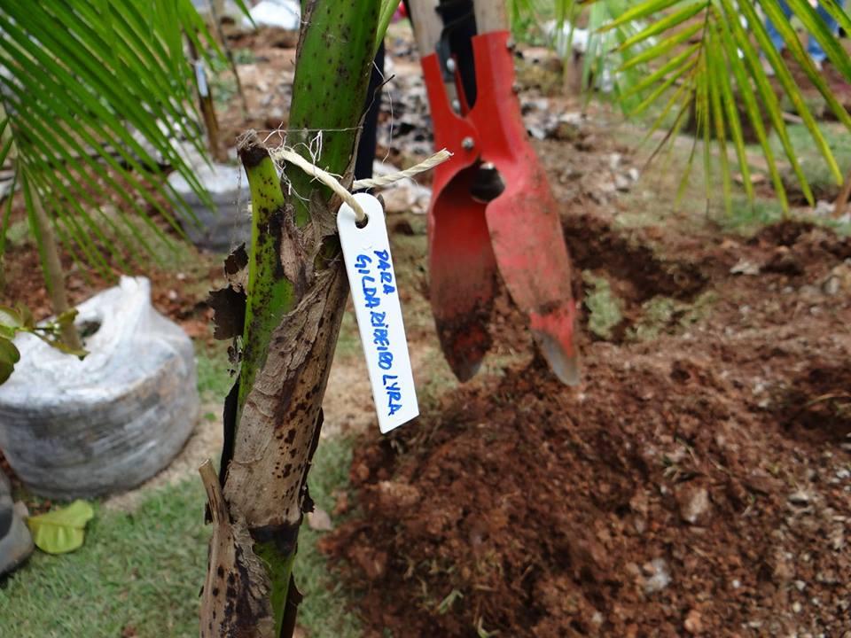 Foto: Novas Árvores Por Aí