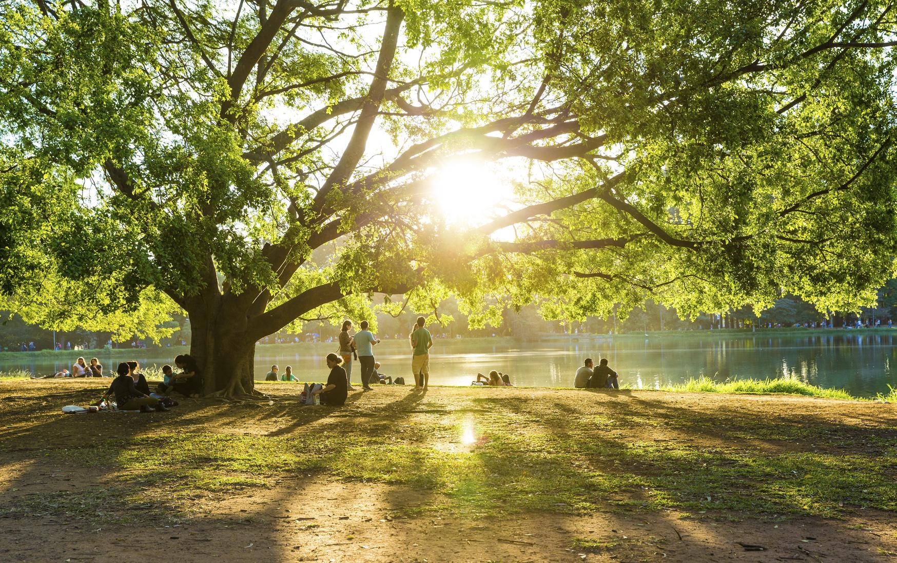 Sao Paulo, Brazil - August 3, 2014: People enjoying a beautiful day in Ibirapuera Park in Sao Paulo, Brazil