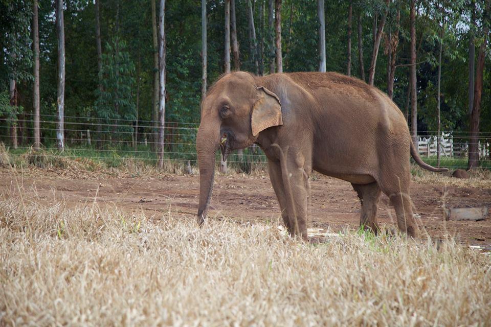 santuario_elefantes