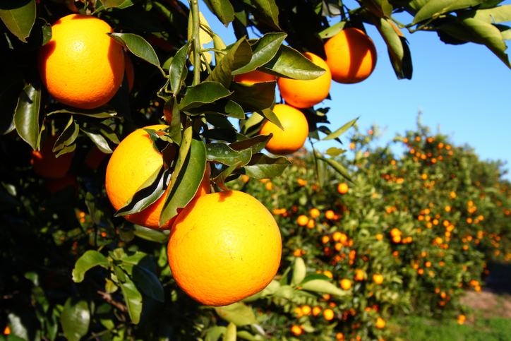 laranja Foto: iStock by Getty Images