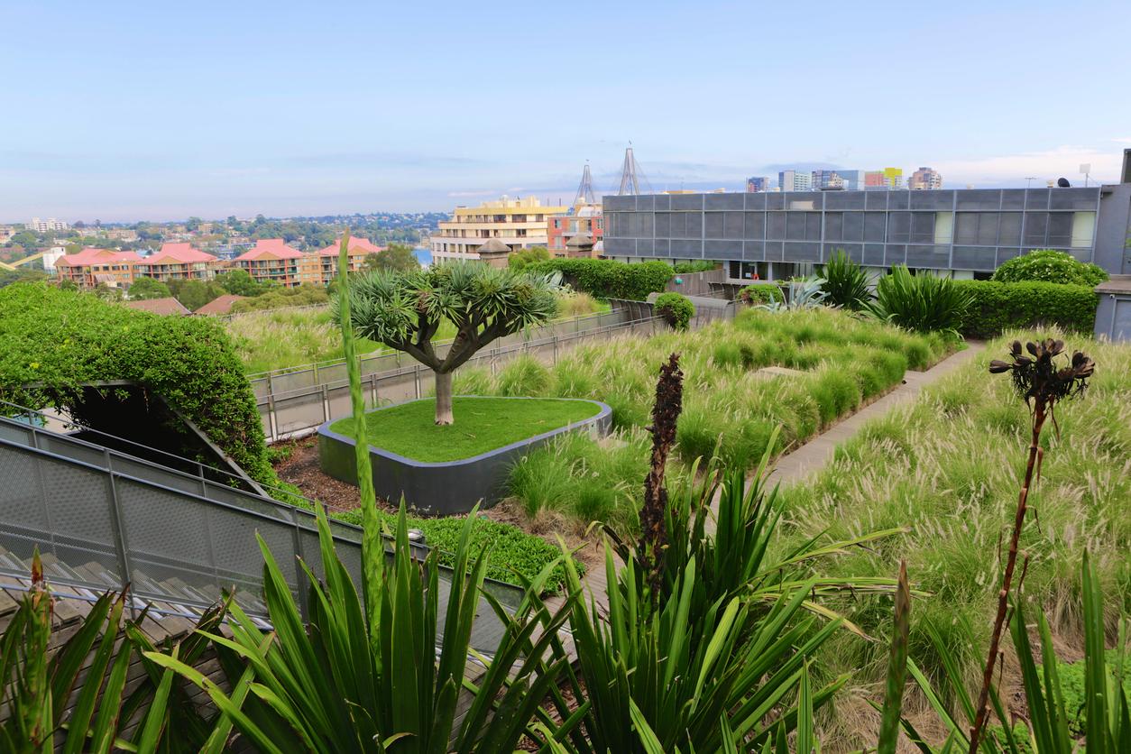 Green rooftop.