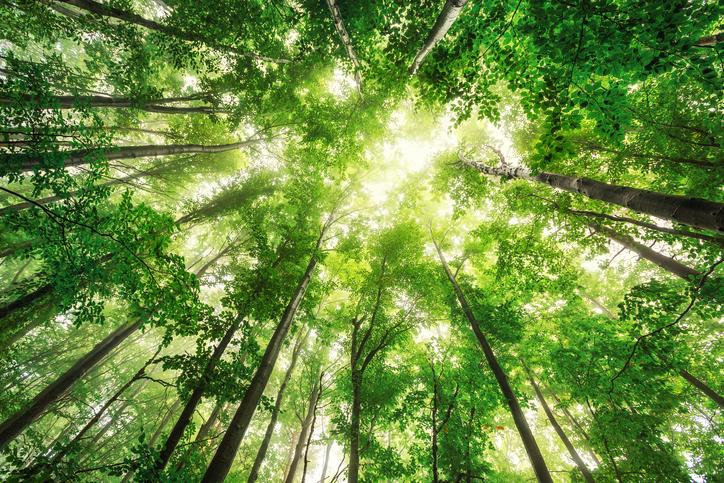 floresta, árvores, planta