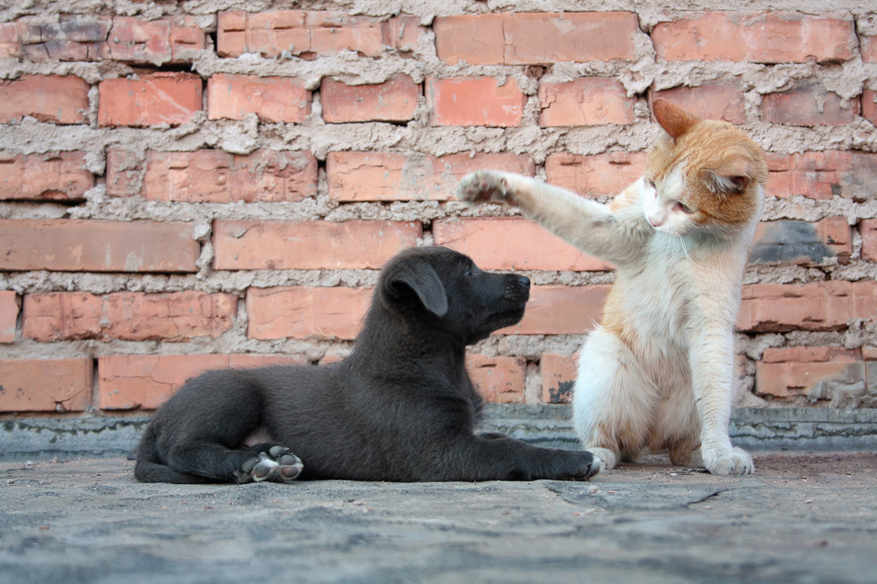 Cat training a dog against a brick wall