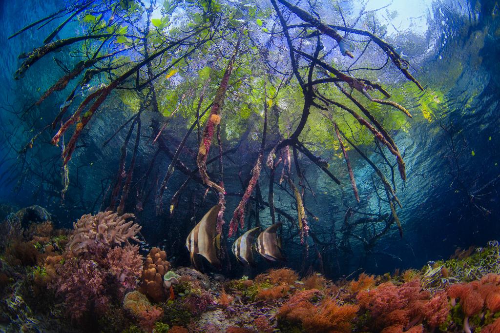 ocean-ciclovivo